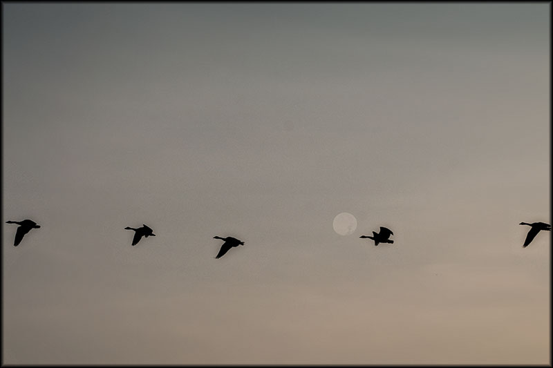 02275pxp.Moonshine.jpg