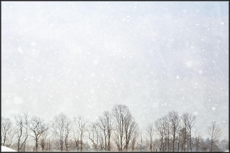 02660pxp.Winter's_Wonder.jpg