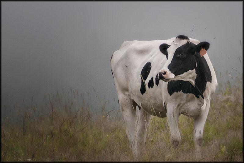 02267pxp.Bessie.jpg