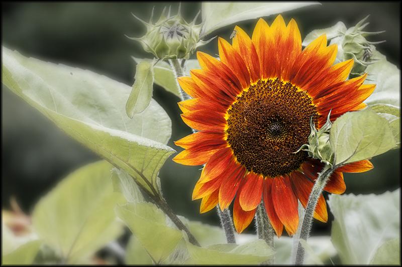 02549pxp.Nature's_Mandala.jpg
