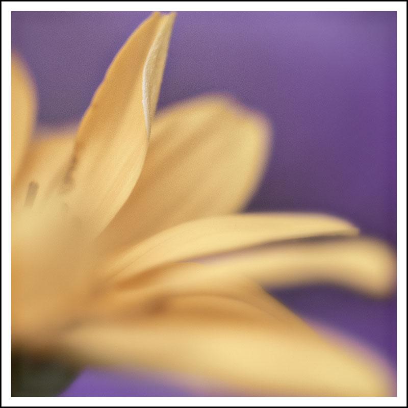 02934pxp.Meditation_Fifty.jpg