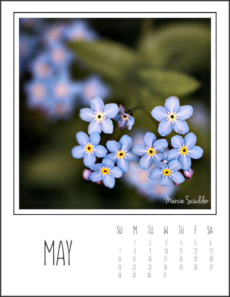 03061pxp.May_Calendar_2017.jpg