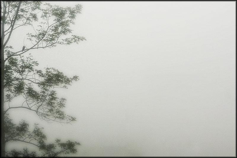 03110pxp.Singing_Tree.jpg
