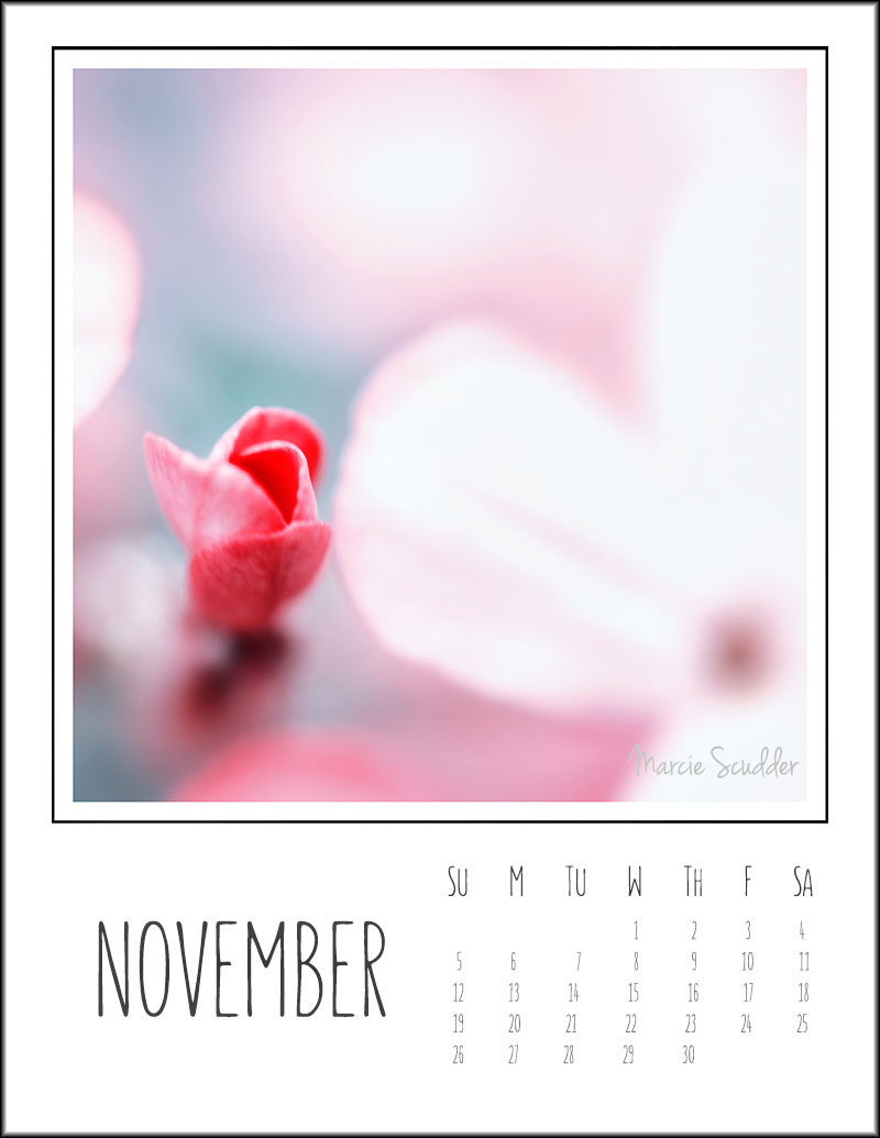 0140pxp.November_Calendar_2017.jpg