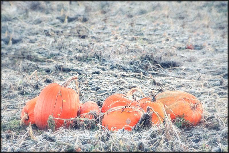 03133pxp.Great_Pumpkins.jpg