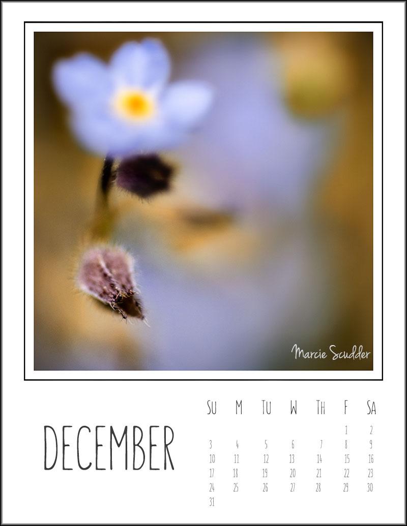 03142pxp.December_Calendar_2017.jpg