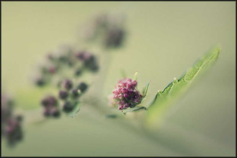 03317pxp.Summer_Rain.jpg