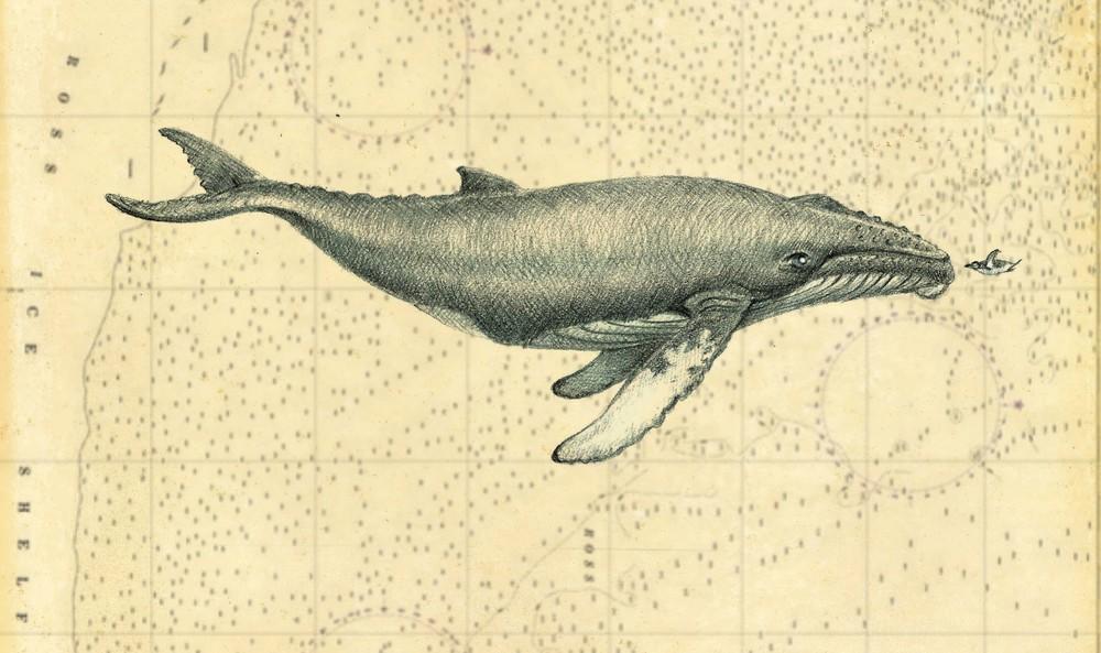 paper-whale.jpg