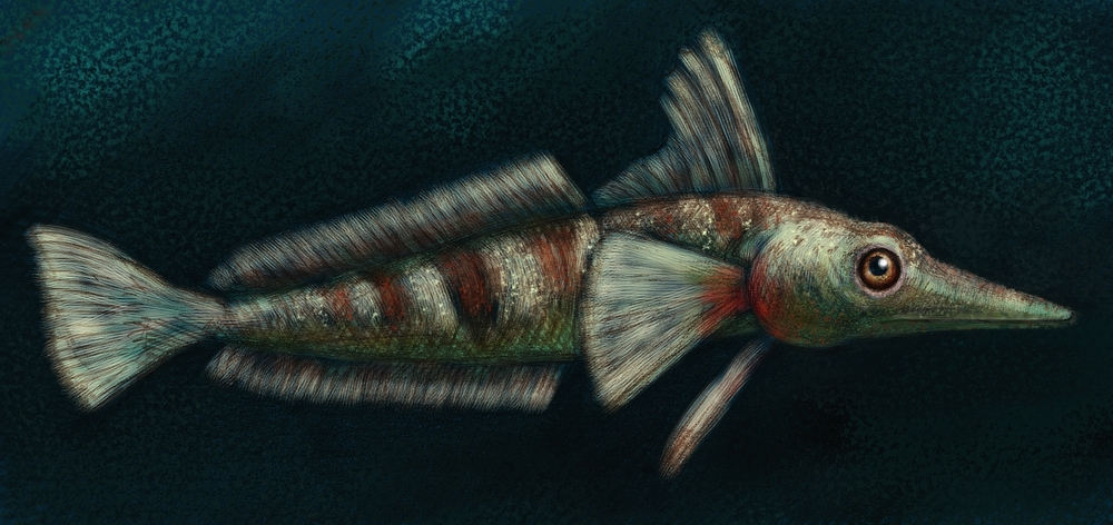icefish paint.jpg