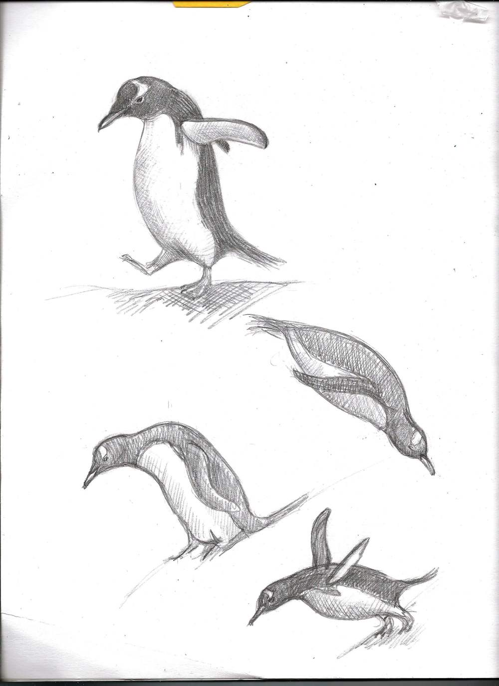 penguinsketches.jpg