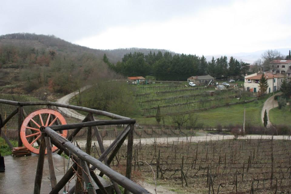 Vineyard in chianti, 2014.