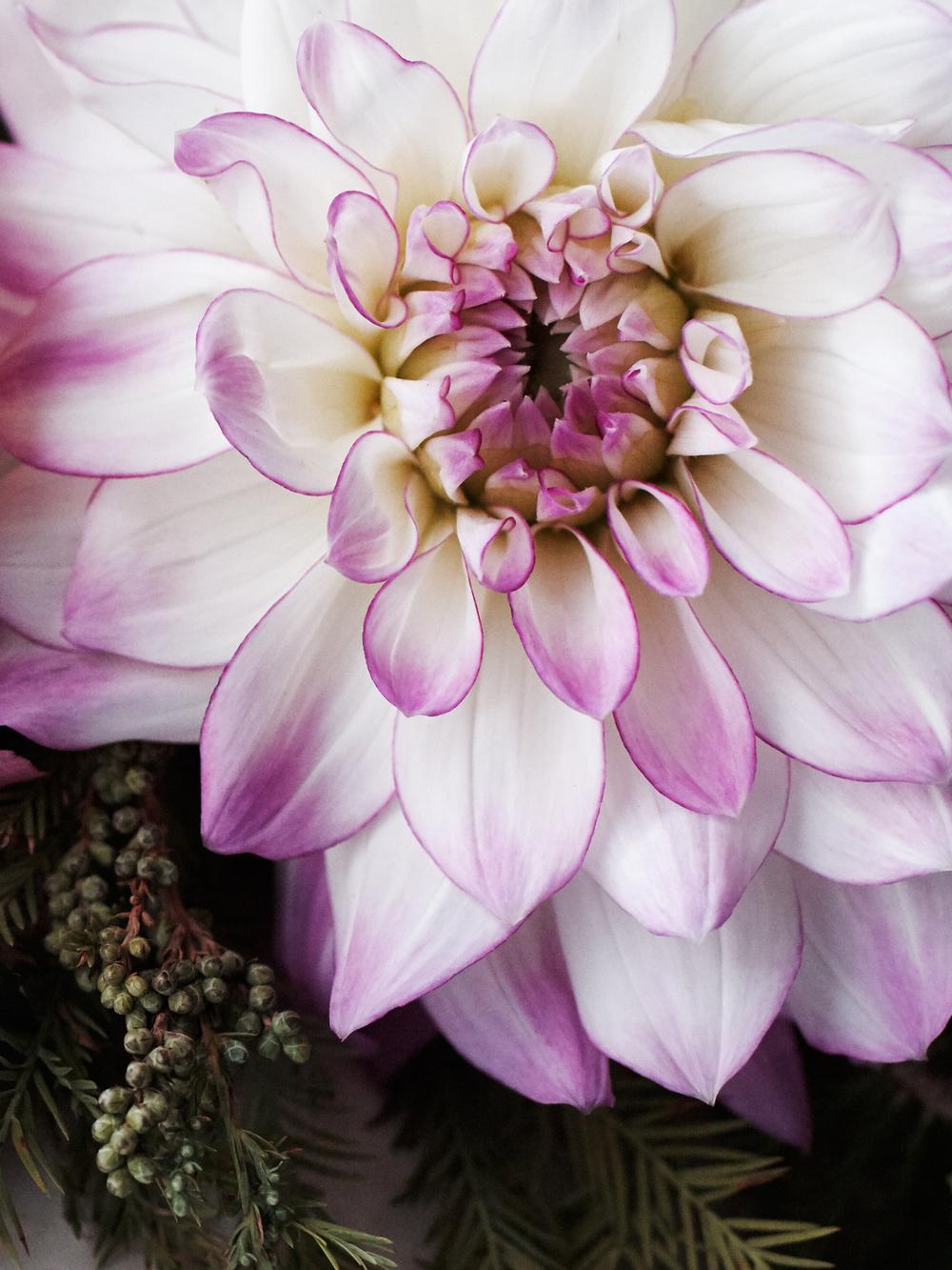 Flowers_102415_055.JPG