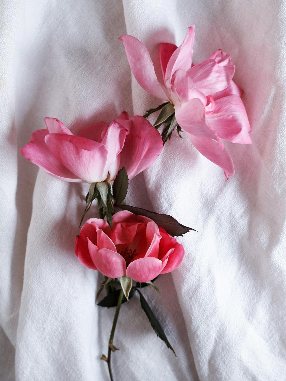 Flowers_102415_199.jpg