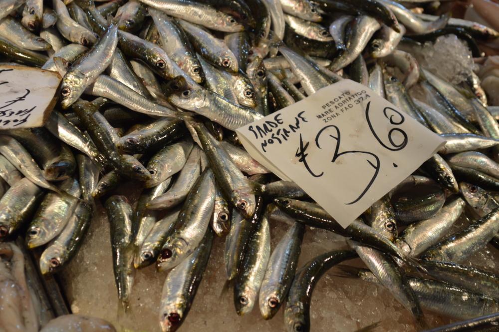Sardines fresh off the boat at Realto Market,Venice.