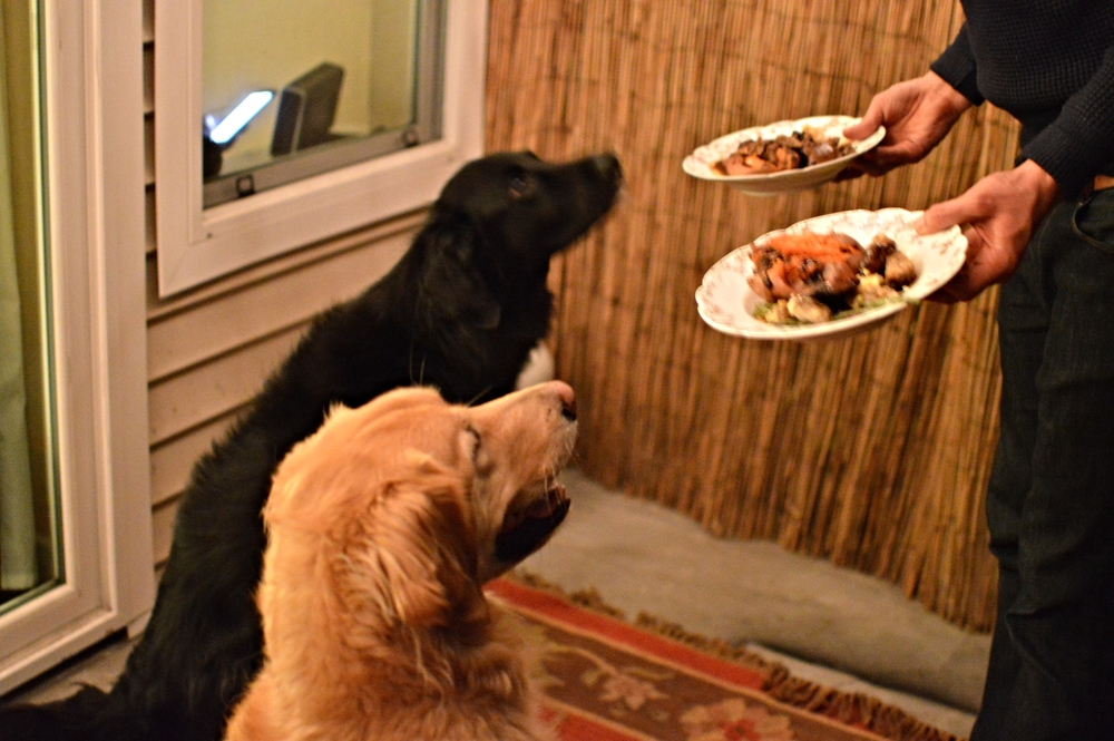 Even Maggie + Oliver got a special Thanksgiving dinner