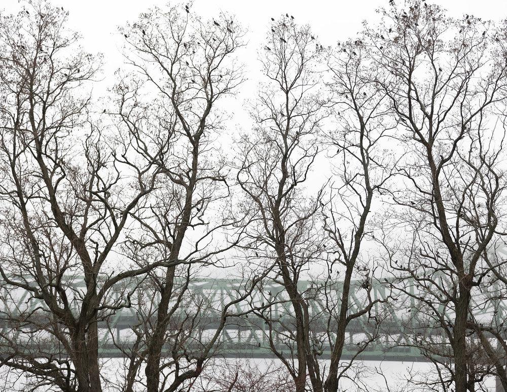 """Tobin Bridge from O""""Malley Park by Joe Greene"""