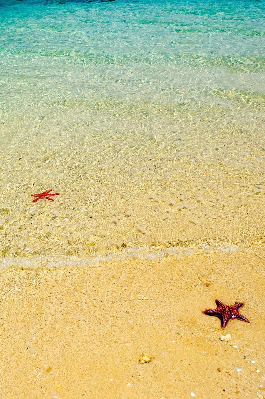heaven-ly-mind :       Starfish! by  Prayatna Bhattarai