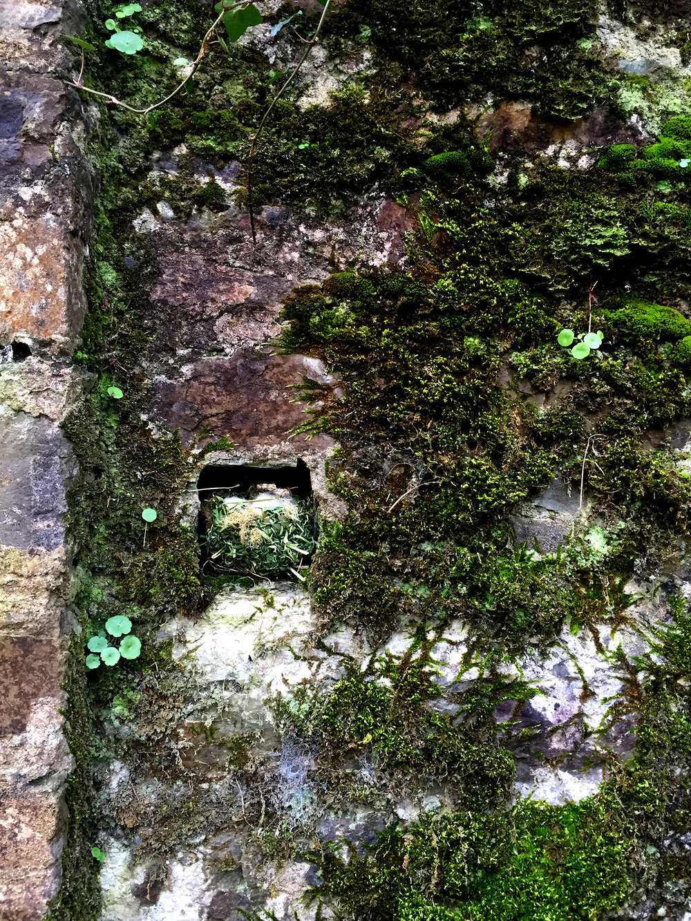 offering, Bandon Castle 3