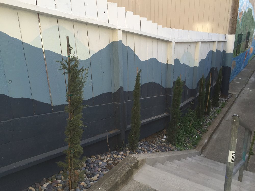Italian Cypresses adorn the southern fence along Kenny Alley