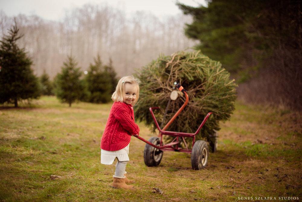 pushing cart with xmas tree | cleveland ohio family photos