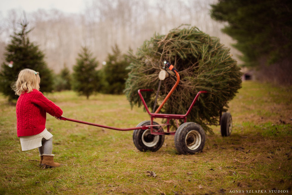 cutting down christmas tree | cleveland ohio lifestyle photography