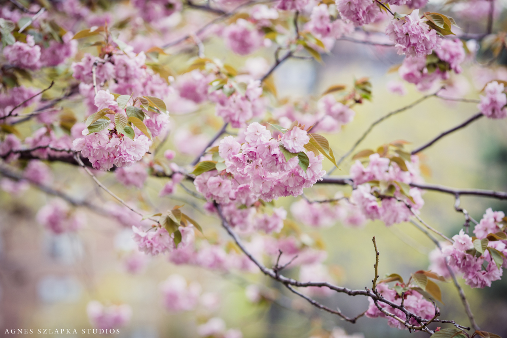cherry blossom photography museum of art | cleveland, ohio lifestyle family photographer
