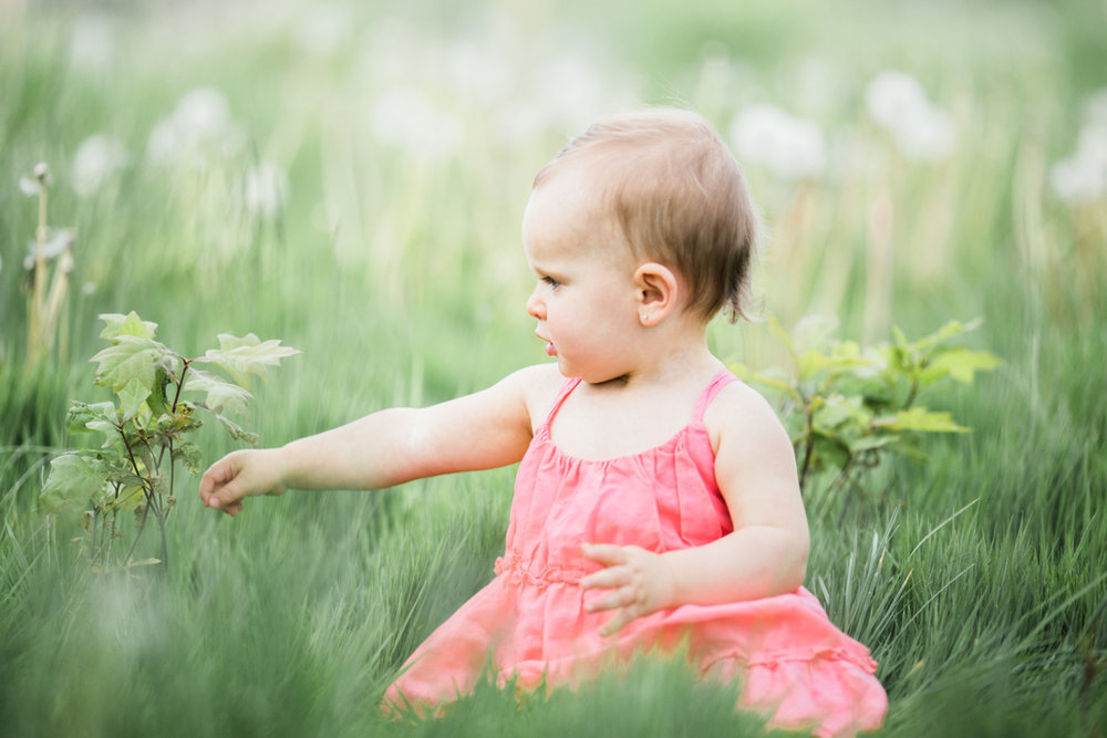 toddler baby girl playing with grass | cleveland, ohio family photographer