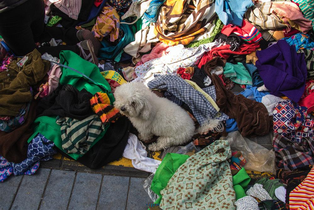 small.dog in Jaffa market.jpg