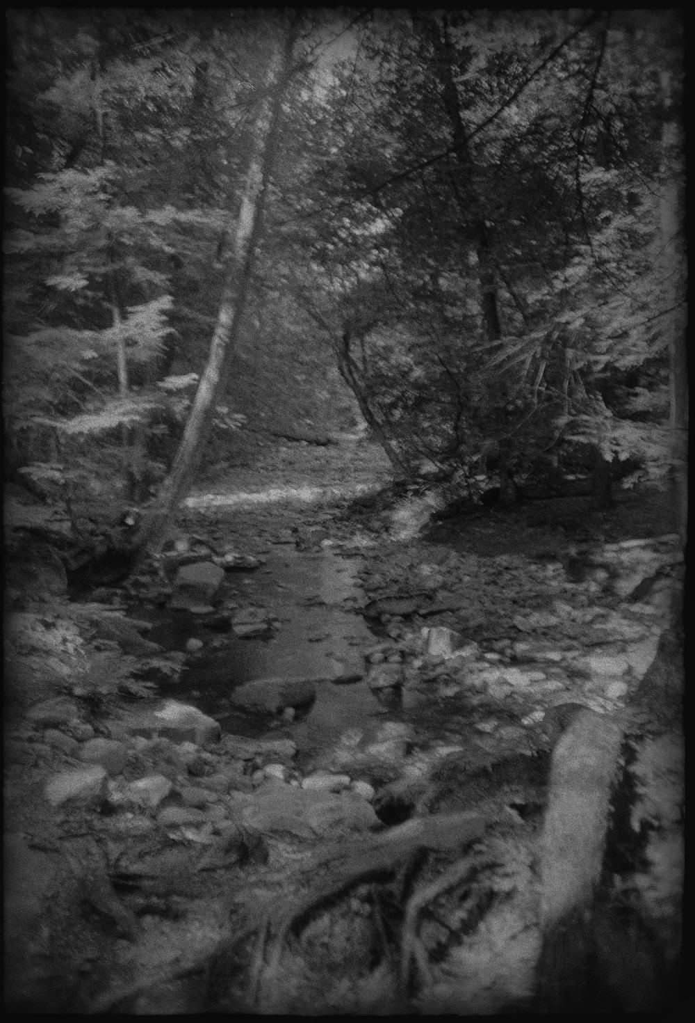 Woods-5.jpg