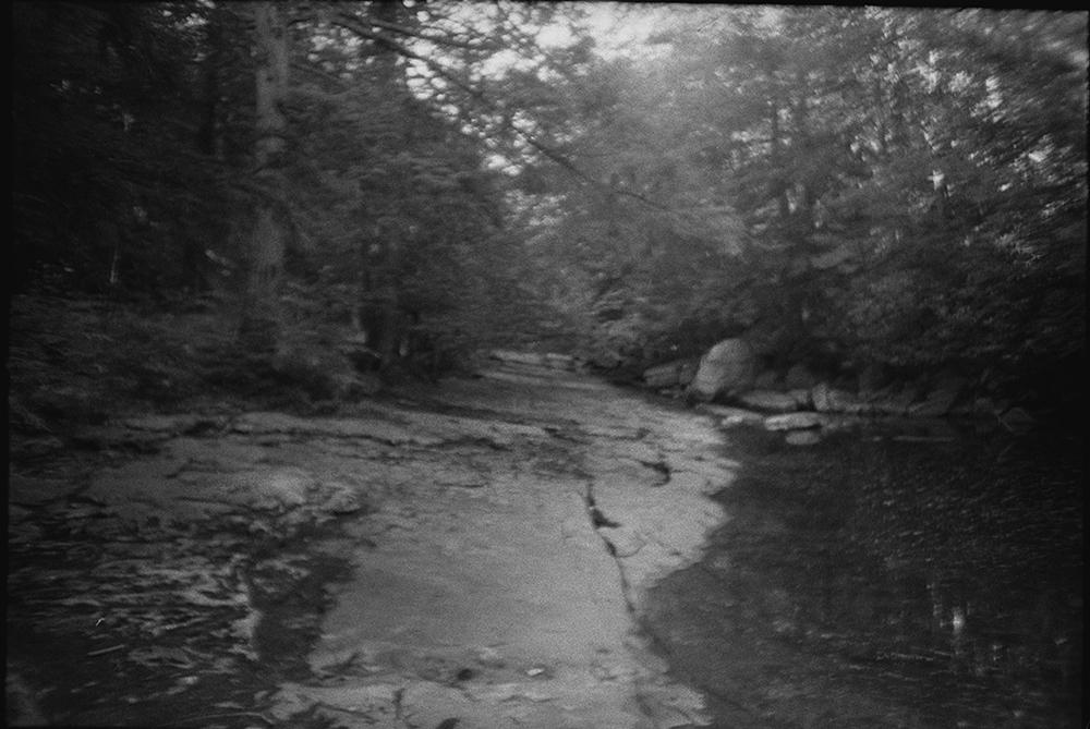 Woods-9.jpg