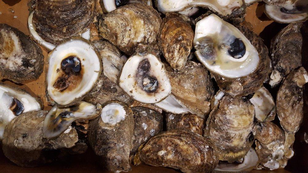 Oyster Shells.jpg