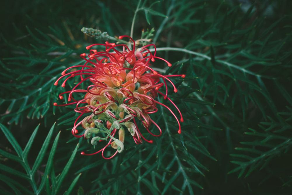 cameron-zegers-photography-sydney-travel-28.jpg