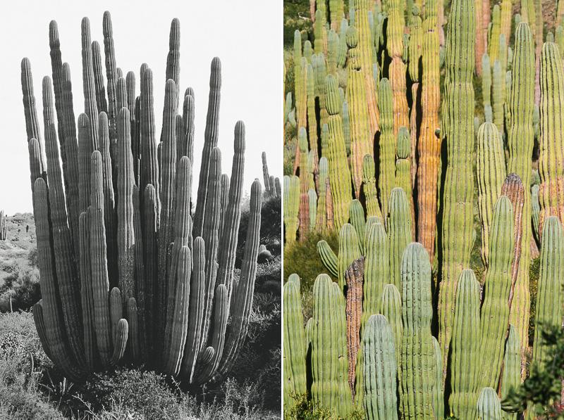 cameron-zegers-photography-baja-mexico-travel-19.jpg