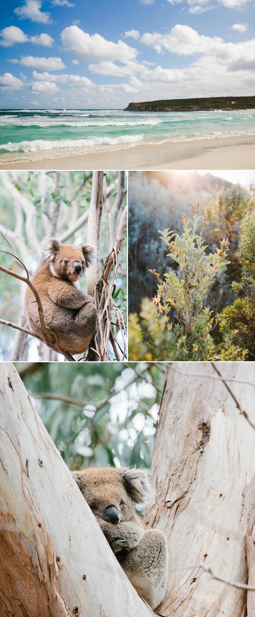 cameron-zegers-seattle-photographer-kangaroo-island-australia-travel_0002.jpg