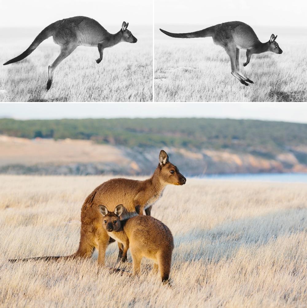 cameron-zegers-seattle-photographer-kangaroo-island-australia-travel_0004.jpg