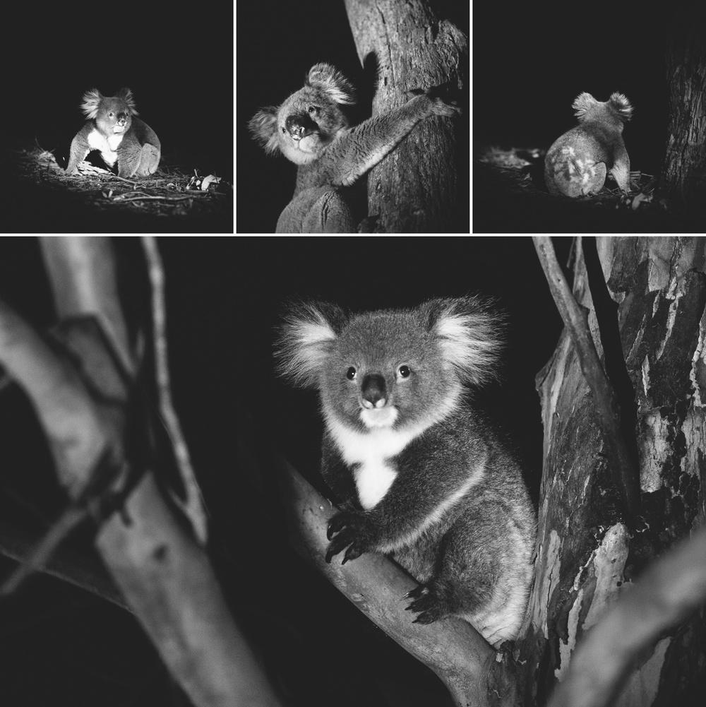 cameron-zegers-seattle-photographer-kangaroo-island-australia-travel_0006.jpg