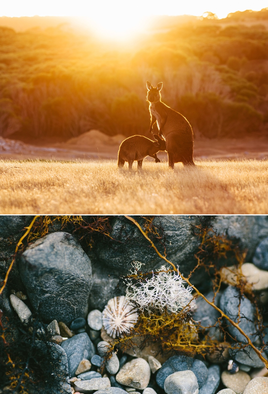 cameron-zegers-seattle-photographer-kangaroo-island-australia-travel_0007.jpg
