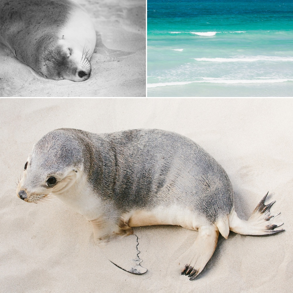 cameron-zegers-seattle-photographer-kangaroo-island-australia-travel_0013.jpg