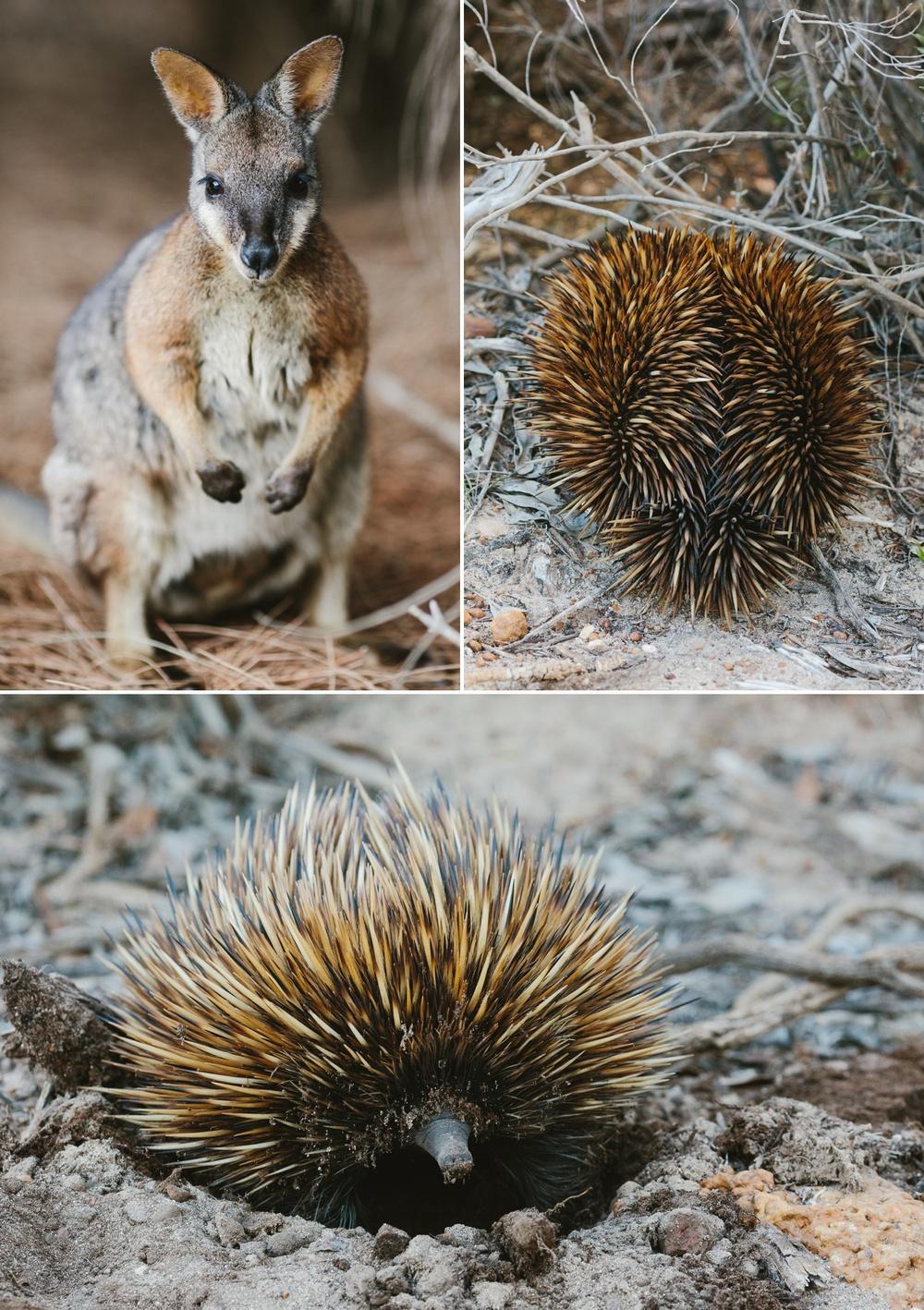 cameron-zegers-seattle-photographer-kangaroo-island-australia-travel_0015.jpg