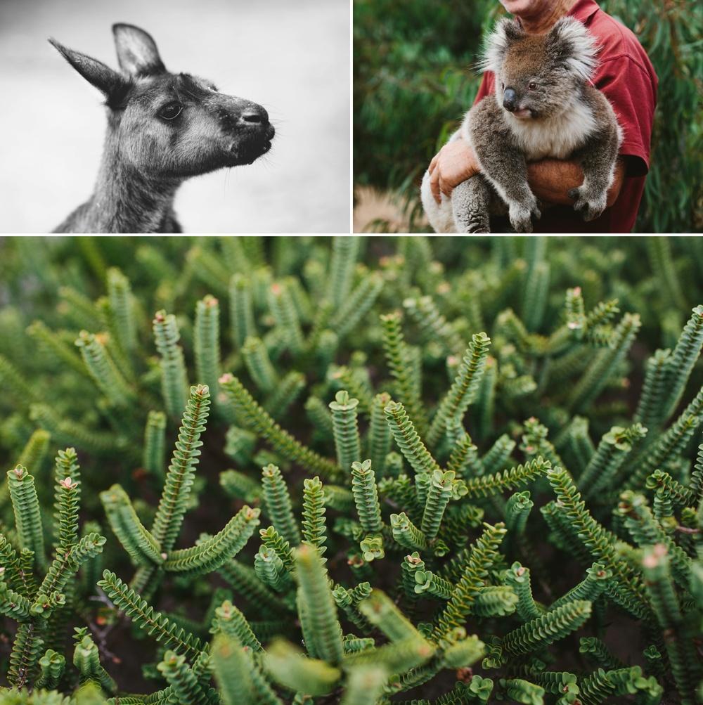 cameron-zegers-seattle-photographer-kangaroo-island-australia-travel_0019.jpg