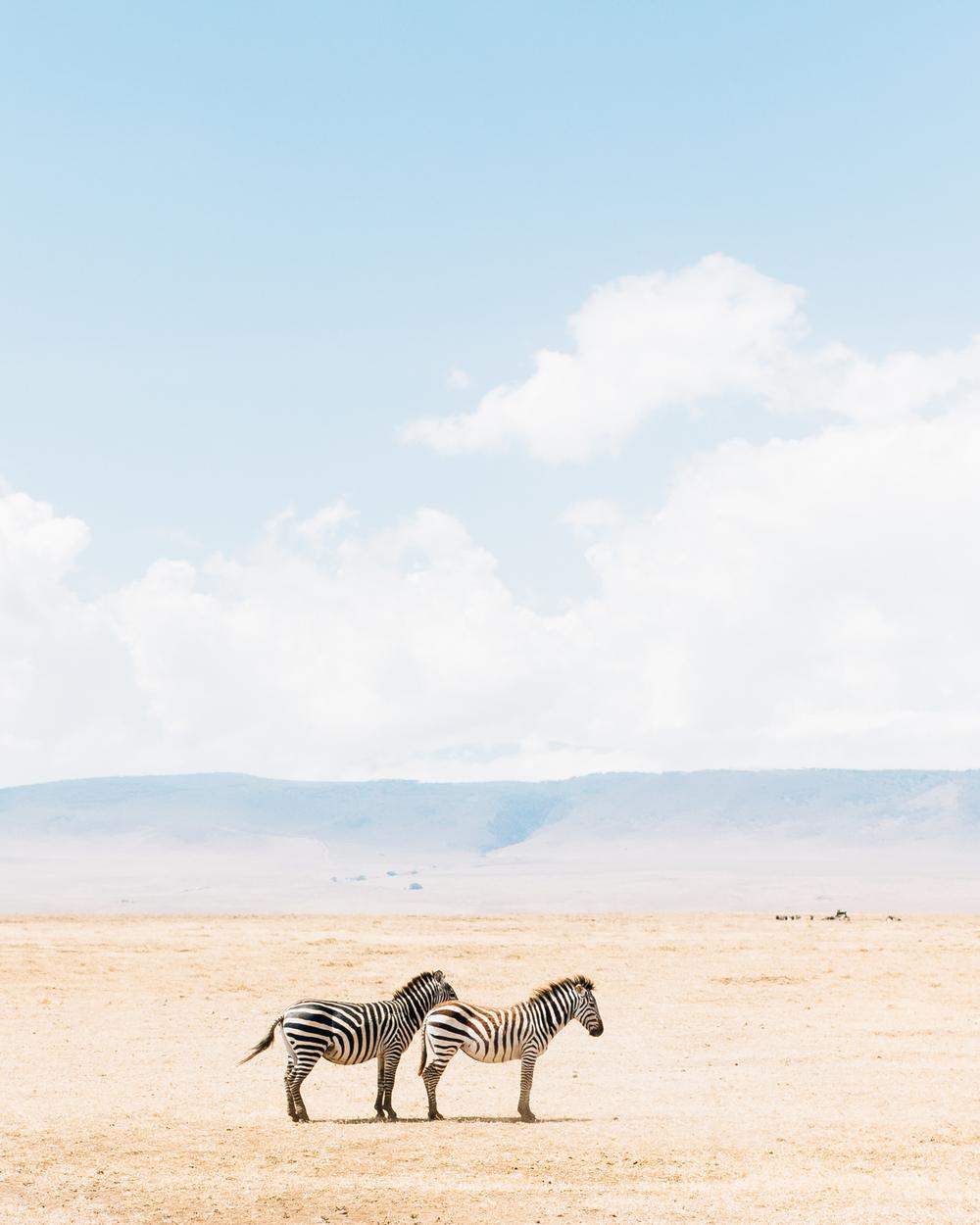 cameron-zegers-photography-tanzania-travel-zebras-1.jpg