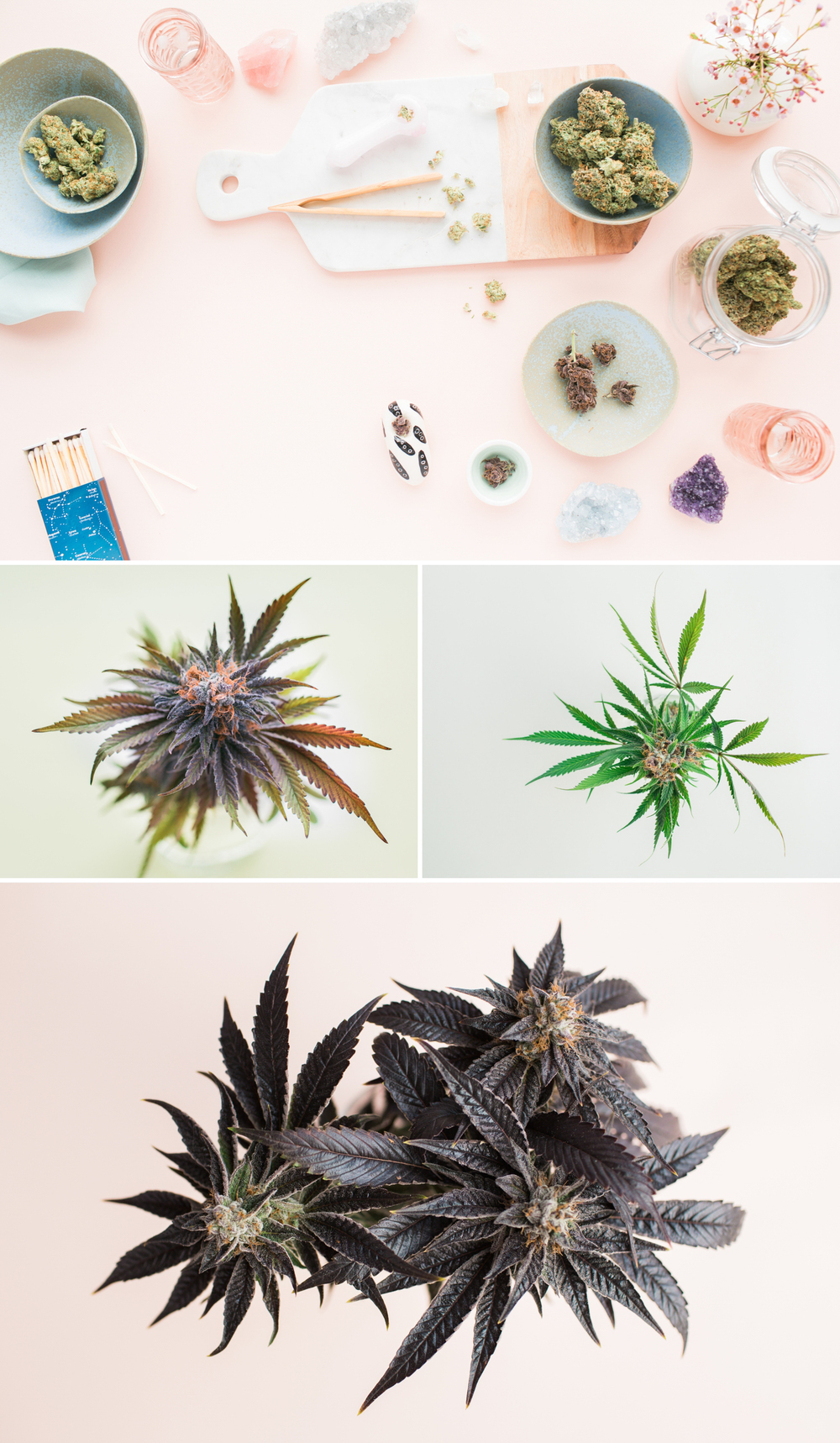 cameron-zegers-photography-marijuana-editorial-3.jpg