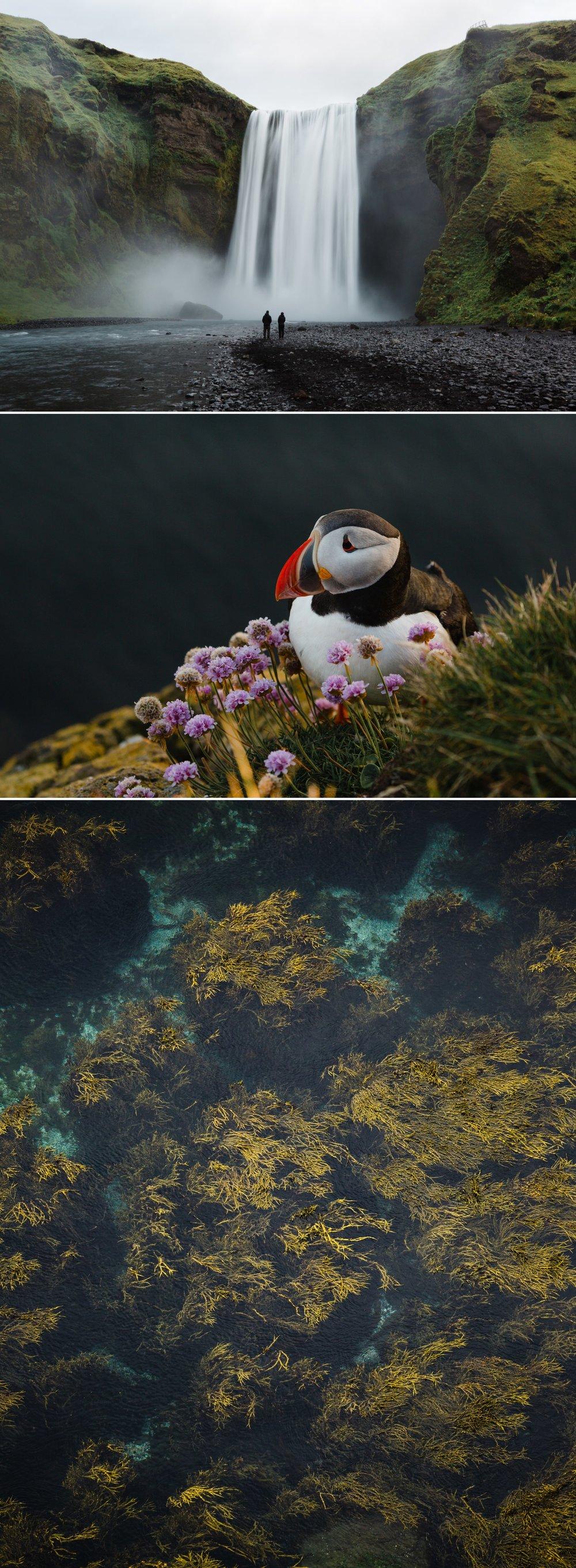 1-iceland-travel-skogafoss-puffin.jpg