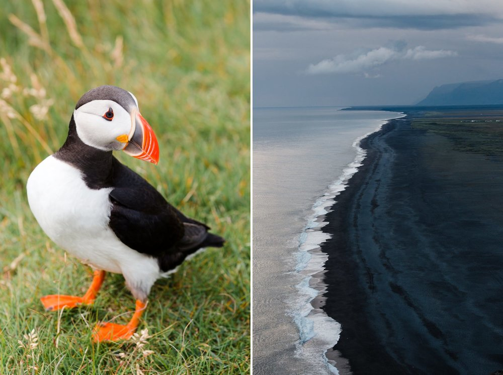 11-reynisfjara-puffin-iceland-travel-photographer.jpg