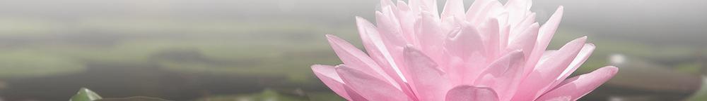 Angela David Yoga Lotus Flower on Water Faded