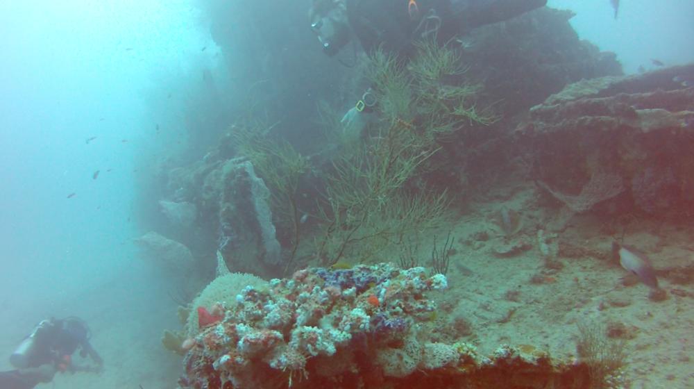 dive1.png