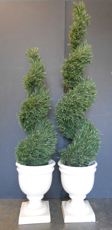 Spiral rosemary topiary