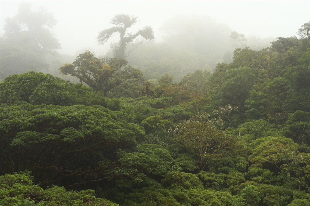 atossa soltani rainforest
