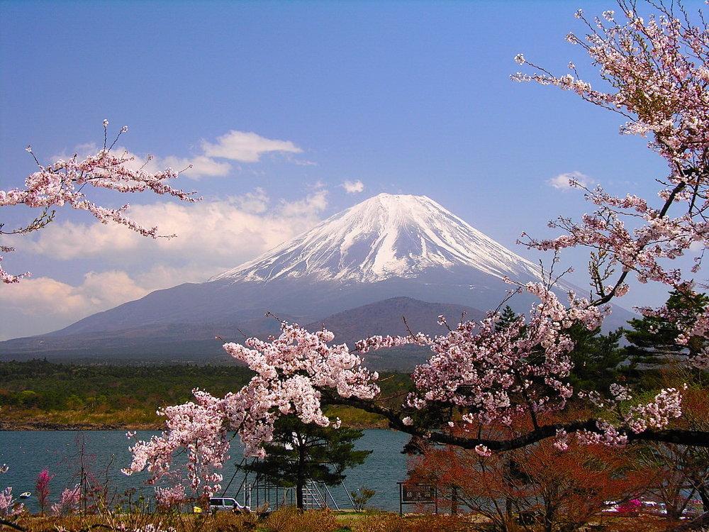 Hoa anh đào. Núi Phú Sĩ. Nhật Bản. Nguồn internet.