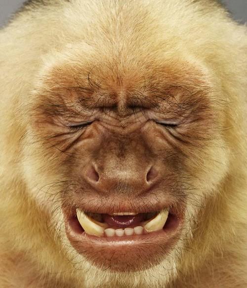 Khỉ cũng phải hết ý với văn hóa của đảng Cộng Sản Việt Nam. Nguồn internet.